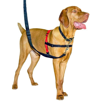 buy Halti-Harness-For-Dogs2