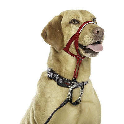 buy Halti-Headcollars-For-Dogs