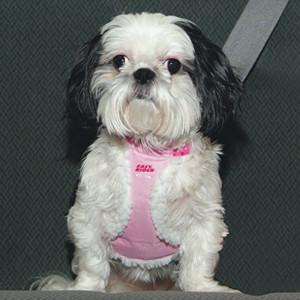 Coastal EASY RIDER® Pet Car Harness