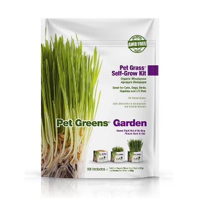 buy Pet-Greens-Garden-Wheat-Grass-Self-Grow-Kit-For-Pets