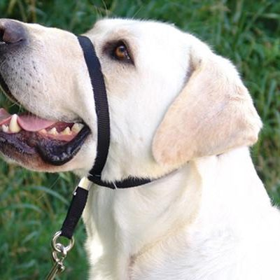 GENTLE LEADER Head Halter for Dogs