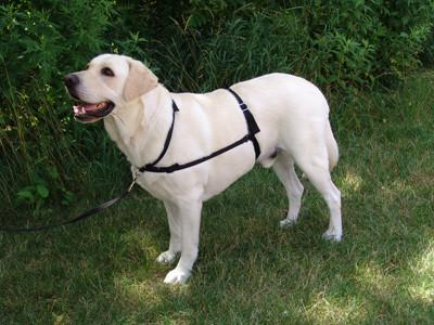 GENTLE LEADER Ultimate Dog Harness