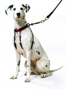 SPORN Halter for Dogs