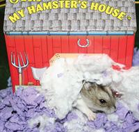 My Hamster's House™ by Oasis