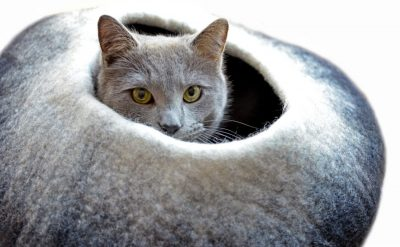 Dharma Dog Karma Cat Ombre Cave Bed