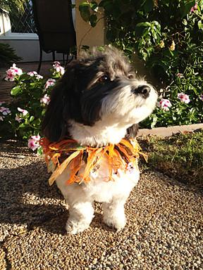Charming Pet Party Collars Various Colours