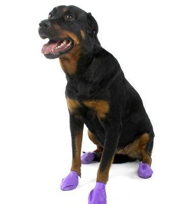 Pawz Dog Boots Disposable Reusable Rubber Dog Boots - Black