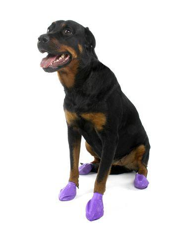 Pawz Dog Boots Disposable Reusable Rubber Dog Boots - Black