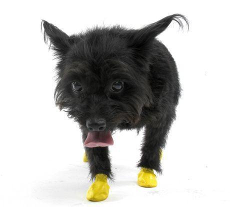 Pawz Dog Boots Disposable Reusable Rubber Dog Boots Black
