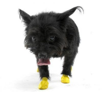 Pawz Dog Boots Disposable Reusable Rubber Dog Boots - Assorted Colours