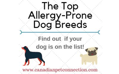 The Top Allergy Prone Dog Breeds