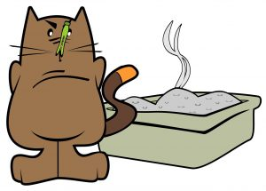 How to get rid of litter box odours