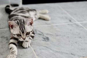 Ask The Pet Expert: Introducing a New Kitty Into Your Home