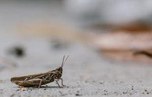 Crickets: The Future of Pet Foods?