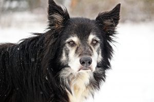Does My Dog or Cat Need Senior Pet Food?
