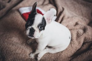 Holiday Stress: Helping Your Pets Cope