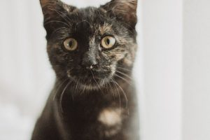 Buy Adult Cat Food online in Canada from Canadian Pet Connection