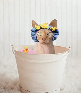 Buy cat grooming and cleaning supplies at Canadian Pet Connection