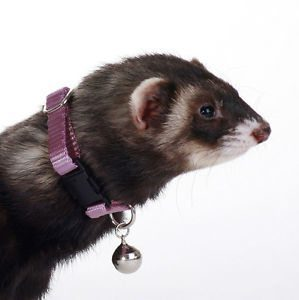 Buy Marshall Ferret Collar With Bell online in Canada at Canadian Pet Connection