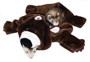 Buy the Marshall bear rug for ferrets at Canadian Pet Connection