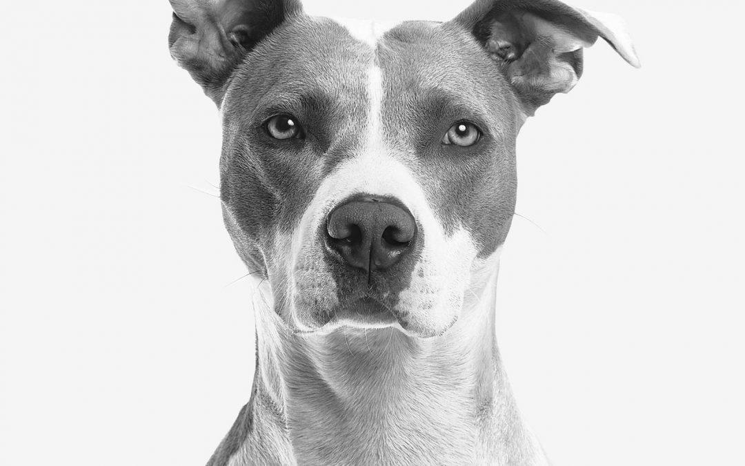 Pet Adoption: Reasons to Adopt