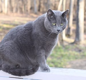 Buy diet, weight management, and indoor cat food online in Canada from Canaadian Pet Connection