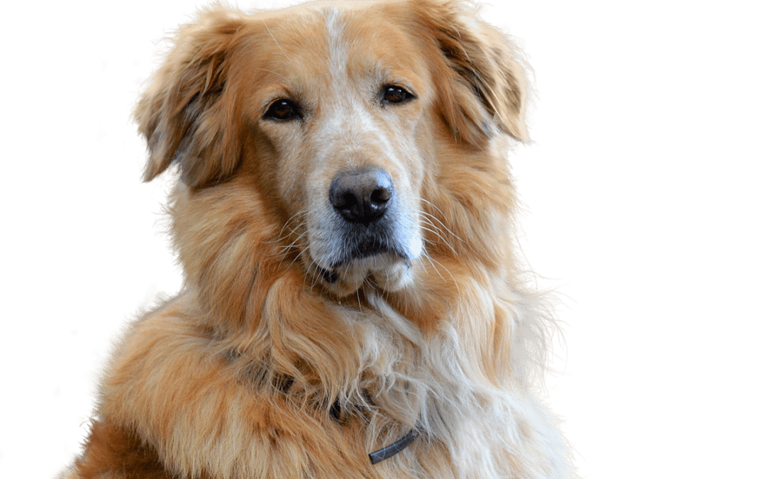 3 Simple Steps to Improving Your Pet's Skin and Coat Health