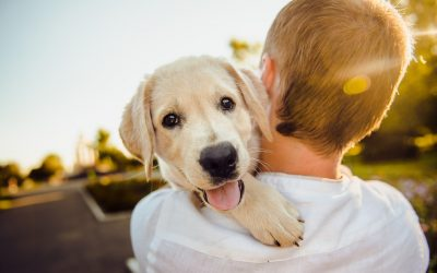 Finding Your Perfect Puppy