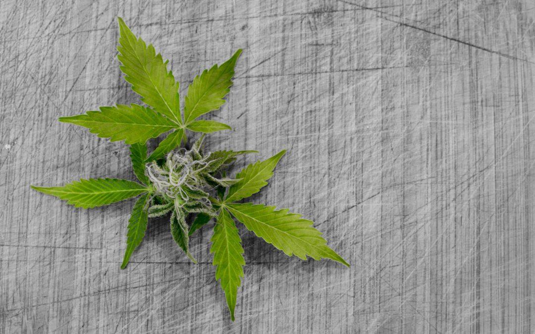Medical Marijuana for Pets: How Medicinal Cannabis May Revolutionize Pet Health in Canada