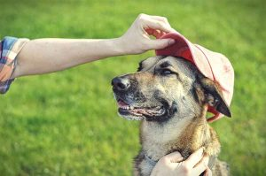 Get all the best Summer safety tips for dogs!