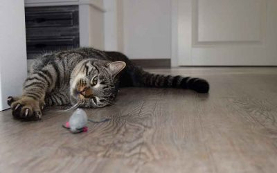 The Truth About Feline Declawing