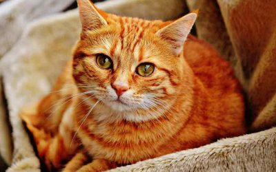 Feline Urinary Health
