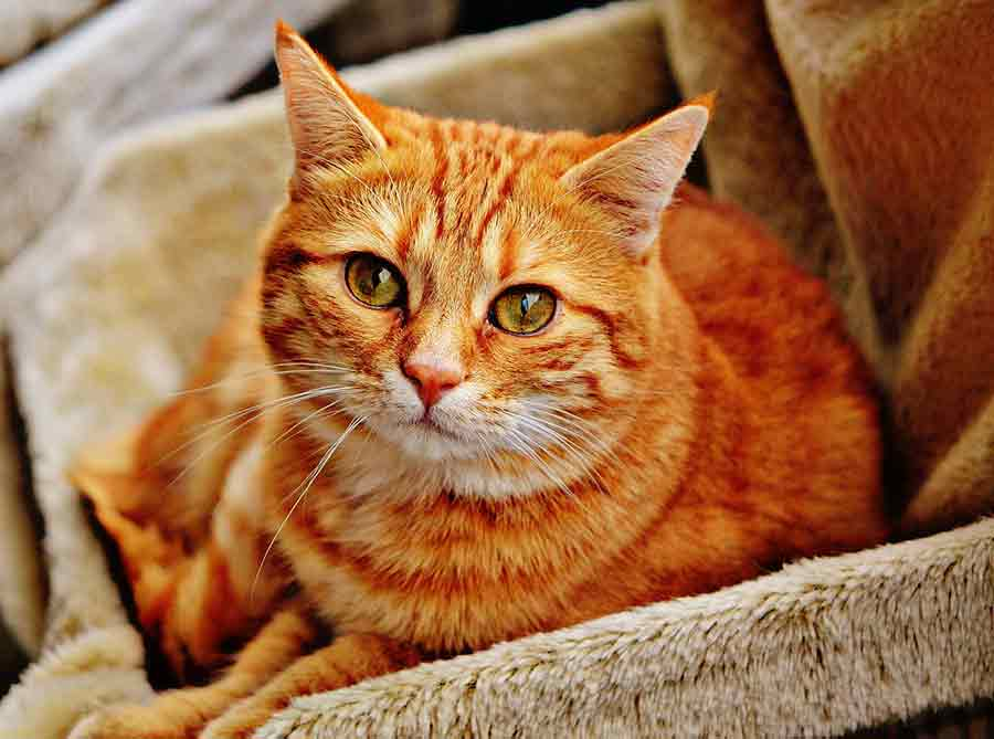 learn more about urinary health for cats at Canadian Pet Connection