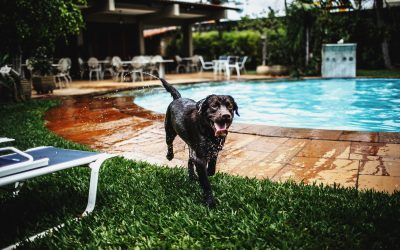 Keeping Your Dog Safe From Water Intoxication