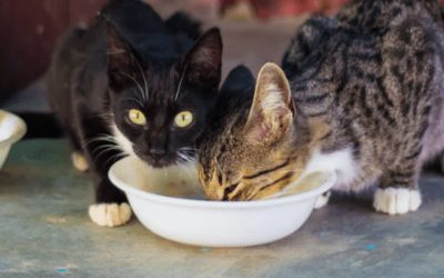 Can Cats Eat a Plant-Based Diet?