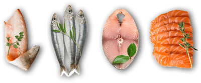 Buy essence ocean and freshwater fish based dog and cat foods online in Canada