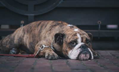 Provincial Animal Welfare Services Act