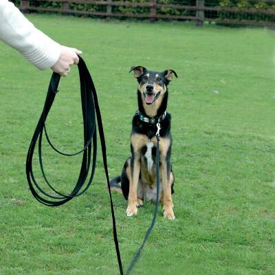 buy Halti-Lightweight-Recall-Line-For-Dogs