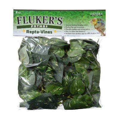 buy Flukers-Repta-Vines-6-Pothos
